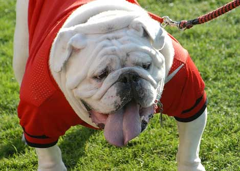 Georgia Bulldogs Mascot