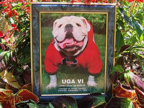 Georgia Bulldogs g Georgia Bulldogs Mascots Uga