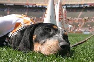 Tennessee Mascot Smokey