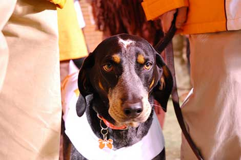 Tennessee Volunteers Mascot